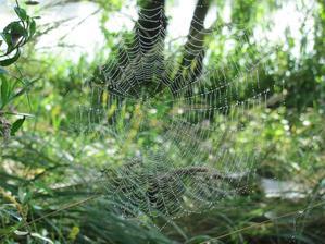 krásy našej prírody a umenie našich pavúčikov