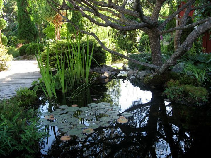 Voda v záhrade - Obrázok č. 214