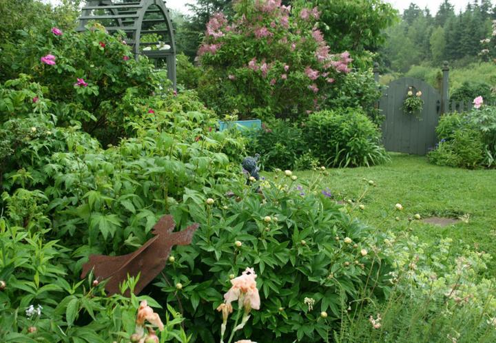 Krása divokej záhrady - Obrázok č. 3
