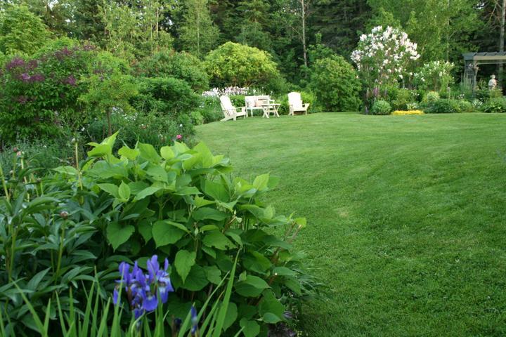 Krása divokej záhrady - Obrázok č. 6