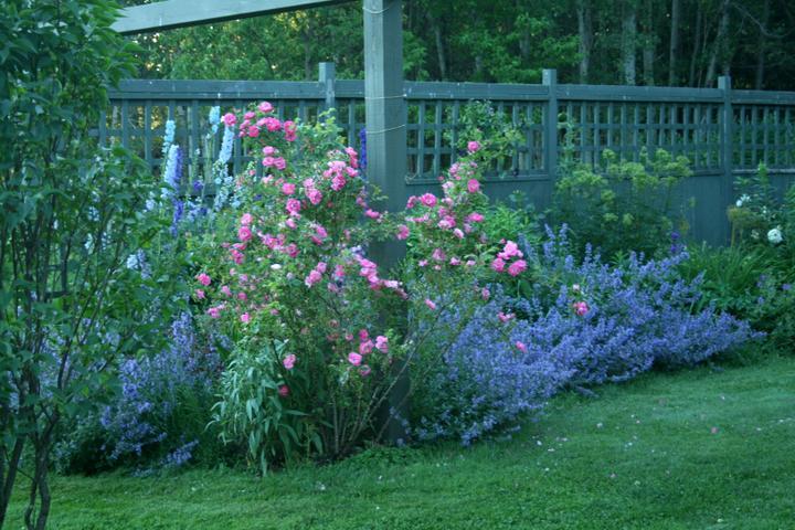 Krása divokej záhrady - Obrázok č. 13