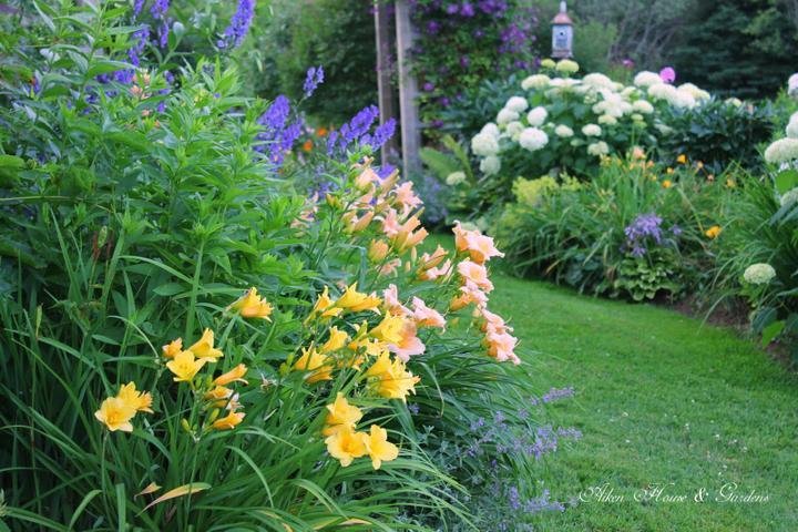 Krása divokej záhrady - Obrázok č. 29