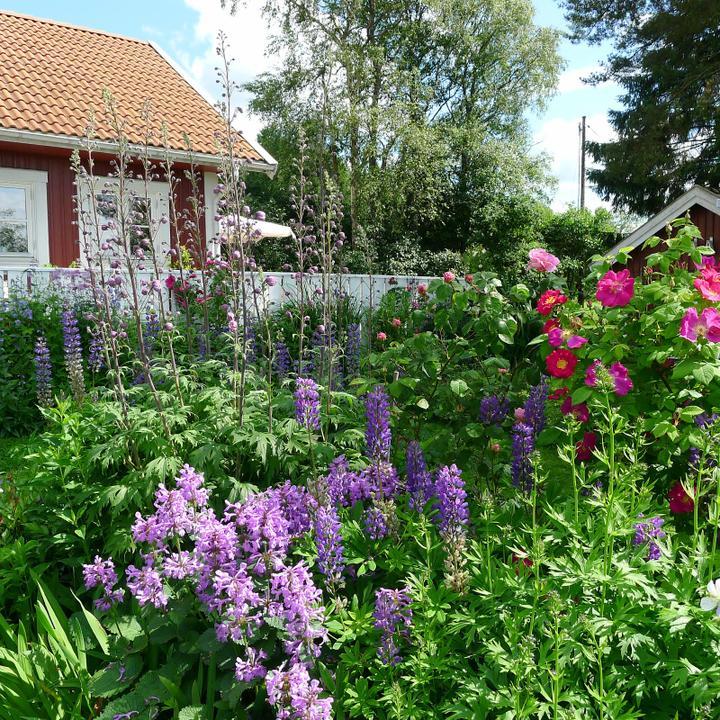 Krása divokej záhrady - Obrázok č. 32