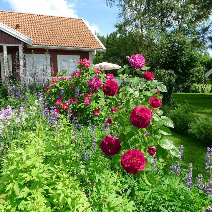 Krása divokej záhrady - Obrázok č. 33