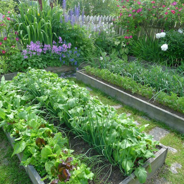 Krása divokej záhrady - Obrázok č. 35
