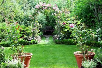 popínavé ruže skrášlia každú záhradu