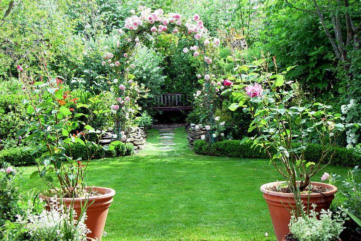 Krása divokej záhrady - popínavé ruže skrášlia každú záhradu