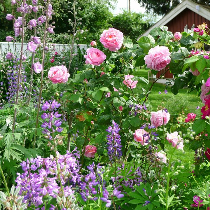 Krása divokej záhrady - Obrázok č. 38