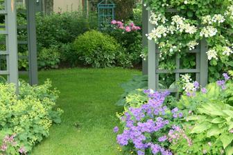 tahavá hortenzia a velké hosty v tieni záhrady