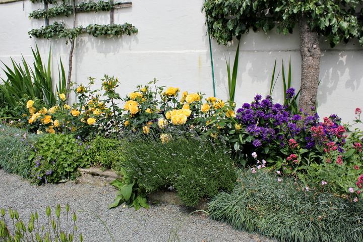 Krása divokej záhrady - Obrázok č. 44