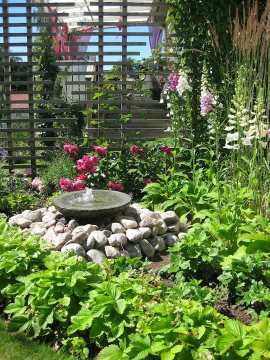 Krása divokej záhrady - Obrázok č. 45