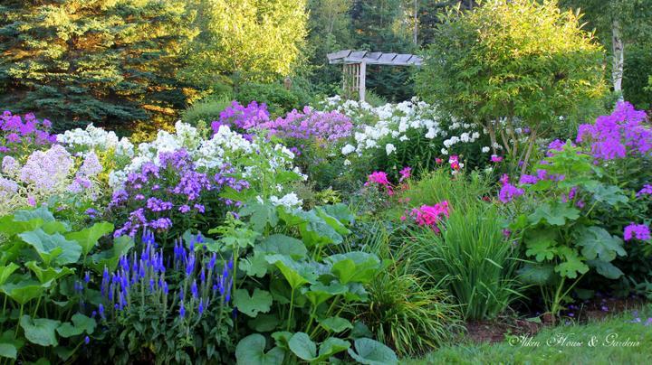 Krása divokej záhrady - more kvetov-krása