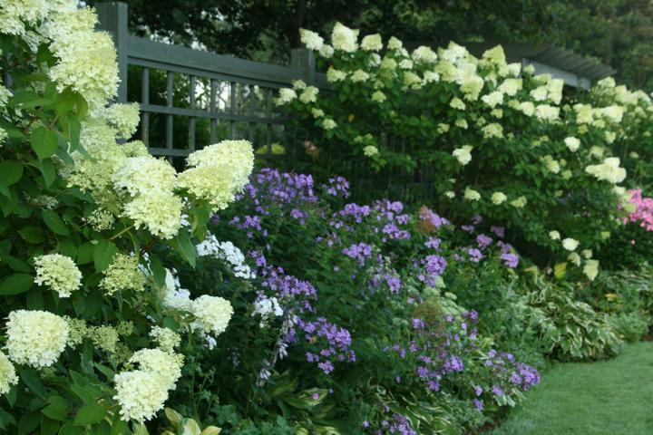 Krása divokej záhrady - tie tahavé hortenzie sú nádherné-pokryjú velkú plochu