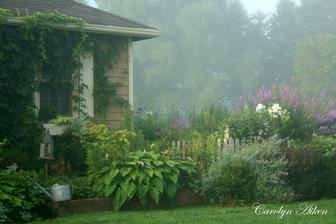 záhrada sa prebúdza-ranný opar
