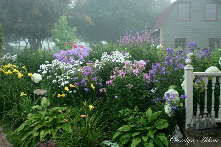 Krása divokej záhrady - hmla ustupuje