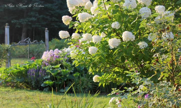 Krása divokej záhrady - už vykuklo slniečko