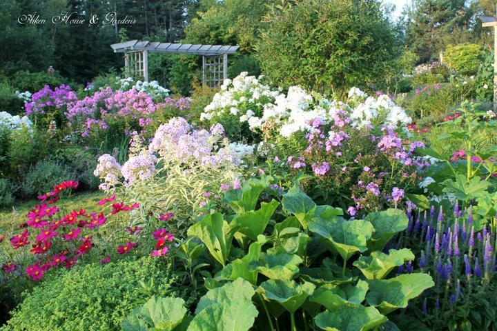 Krása divokej záhrady - záhrada sa prebudila-nádherne sa rozvonala
