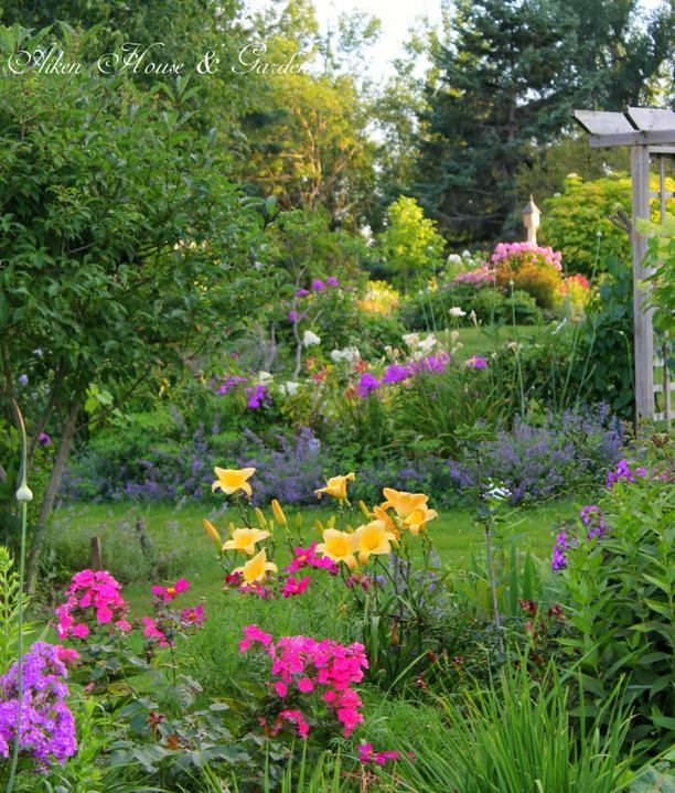 Krása divokej záhrady - laliovky sa krásne rozvili