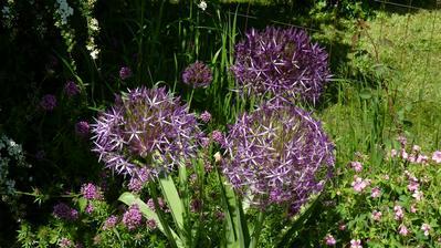 vynikajú elegantnými kvetmi-budú ozdobou vašej záhrady