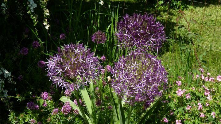 Krása divokej záhrady - vynikajú elegantnými kvetmi-budú ozdobou vašej záhrady
