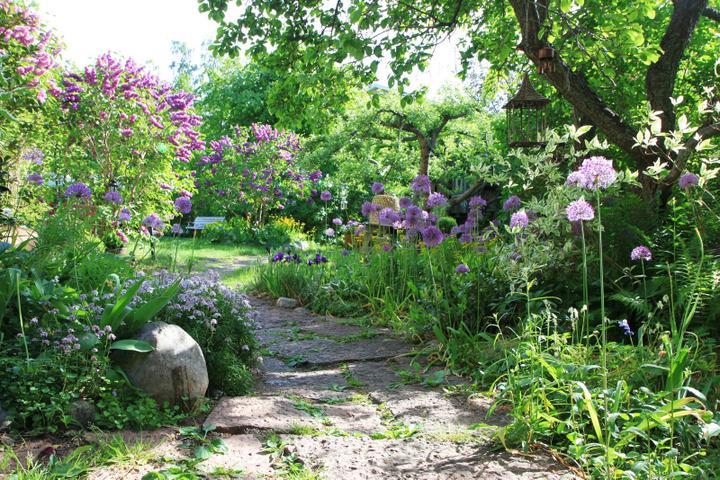 Krása divokej záhrady - Obrázok č. 77