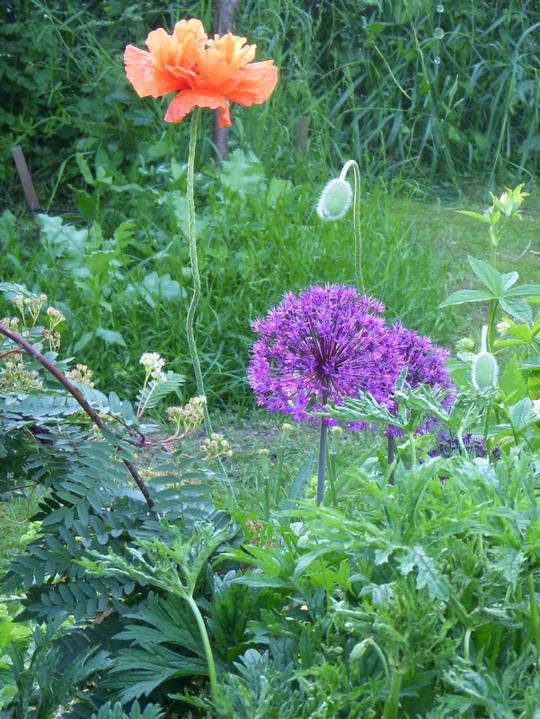 Krása divokej záhrady - Obrázok č. 78