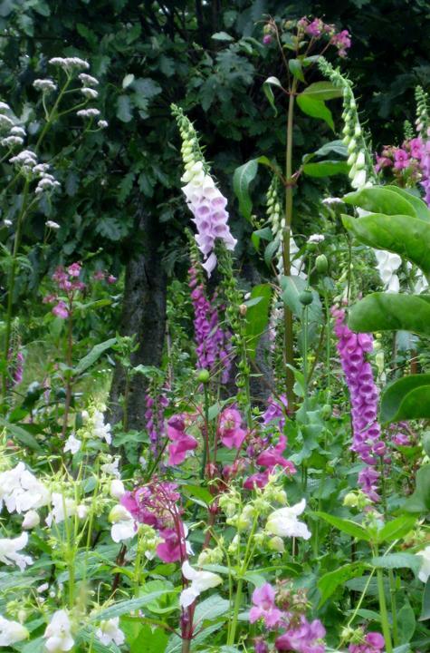 Krása divokej záhrady - má rozne farby a všetky sú nádherné
