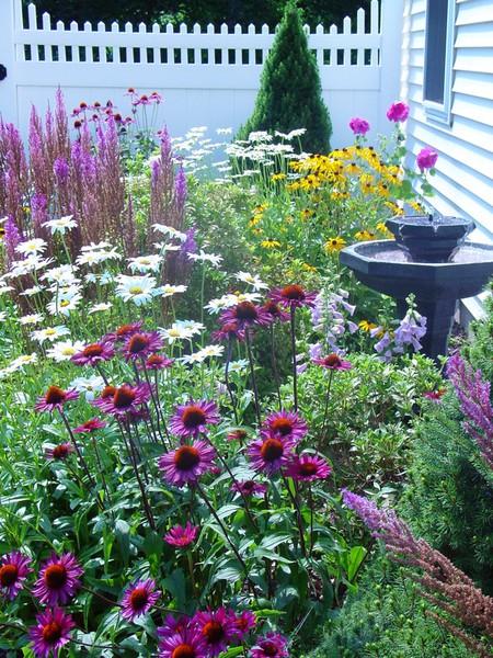 Krása divokej záhrady - Obrázok č. 90