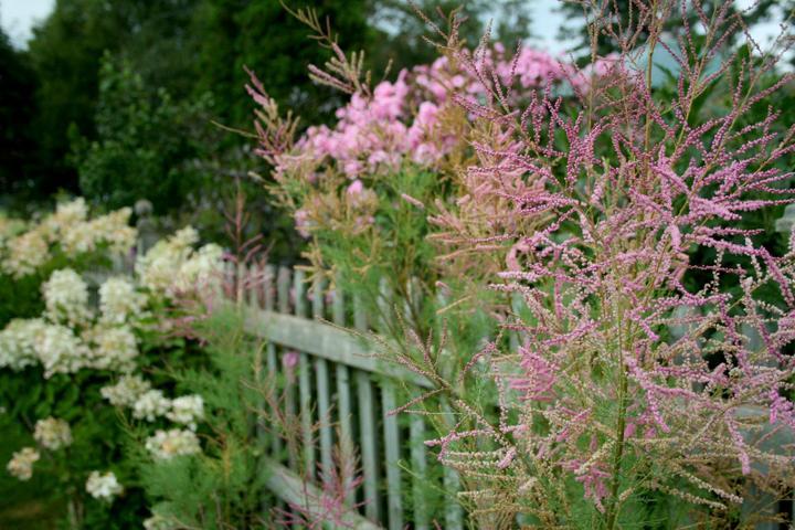 Krása divokej záhrady - Obrázok č. 94