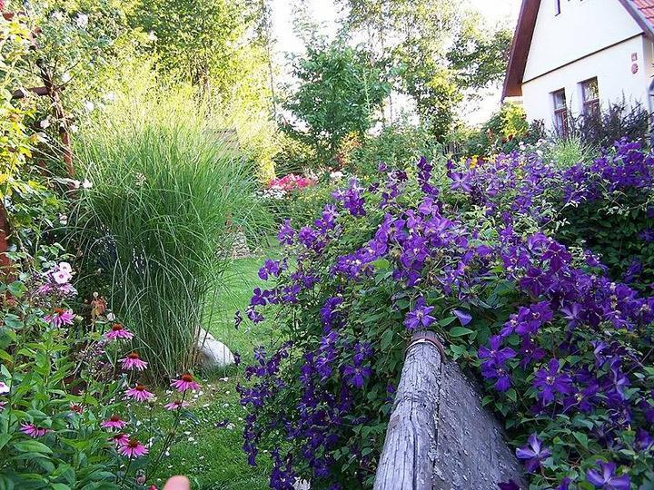 Krása divokej záhrady - Obrázok č. 97