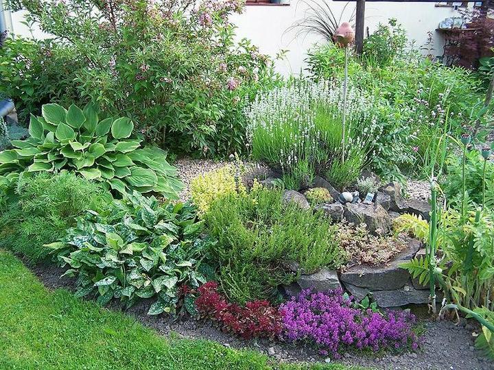 Krása divokej záhrady - Obrázok č. 99