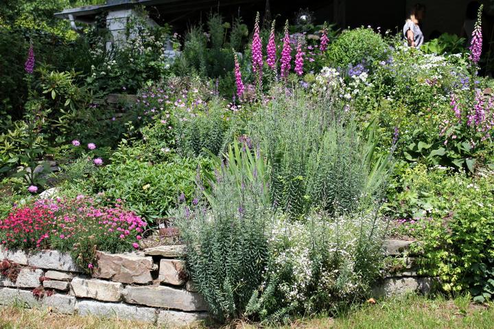 Krása divokej záhrady - Obrázok č. 111