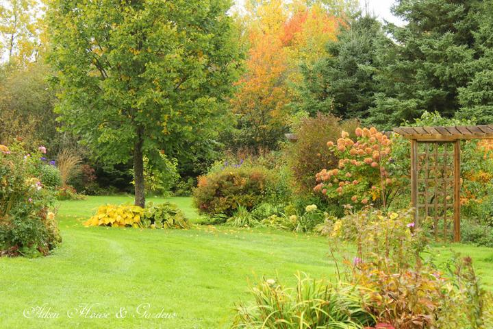 Krása divokej záhrady - a je tu jesen...