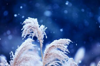okrasné trávy sú nádherné aj v zime