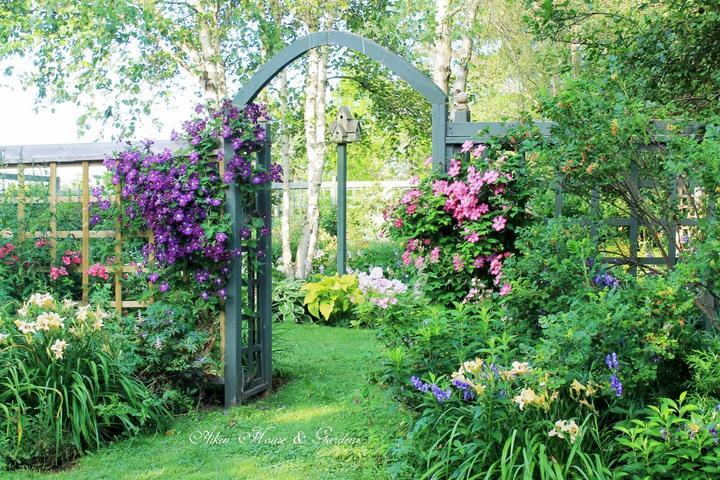 Krása divokej záhrady - Obrázok č. 284