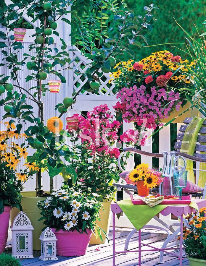 Balkonové a terasové zátišie - Obrázok č. 376