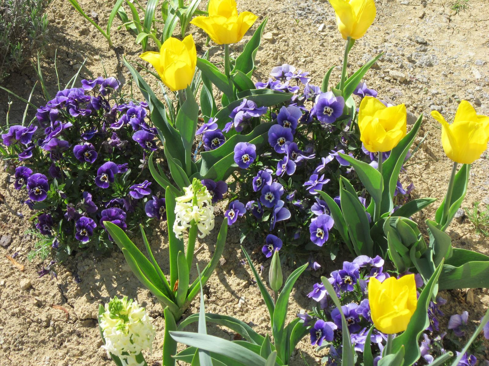 Moja záhrada...ako šiel čas - Obrázok č. 8
