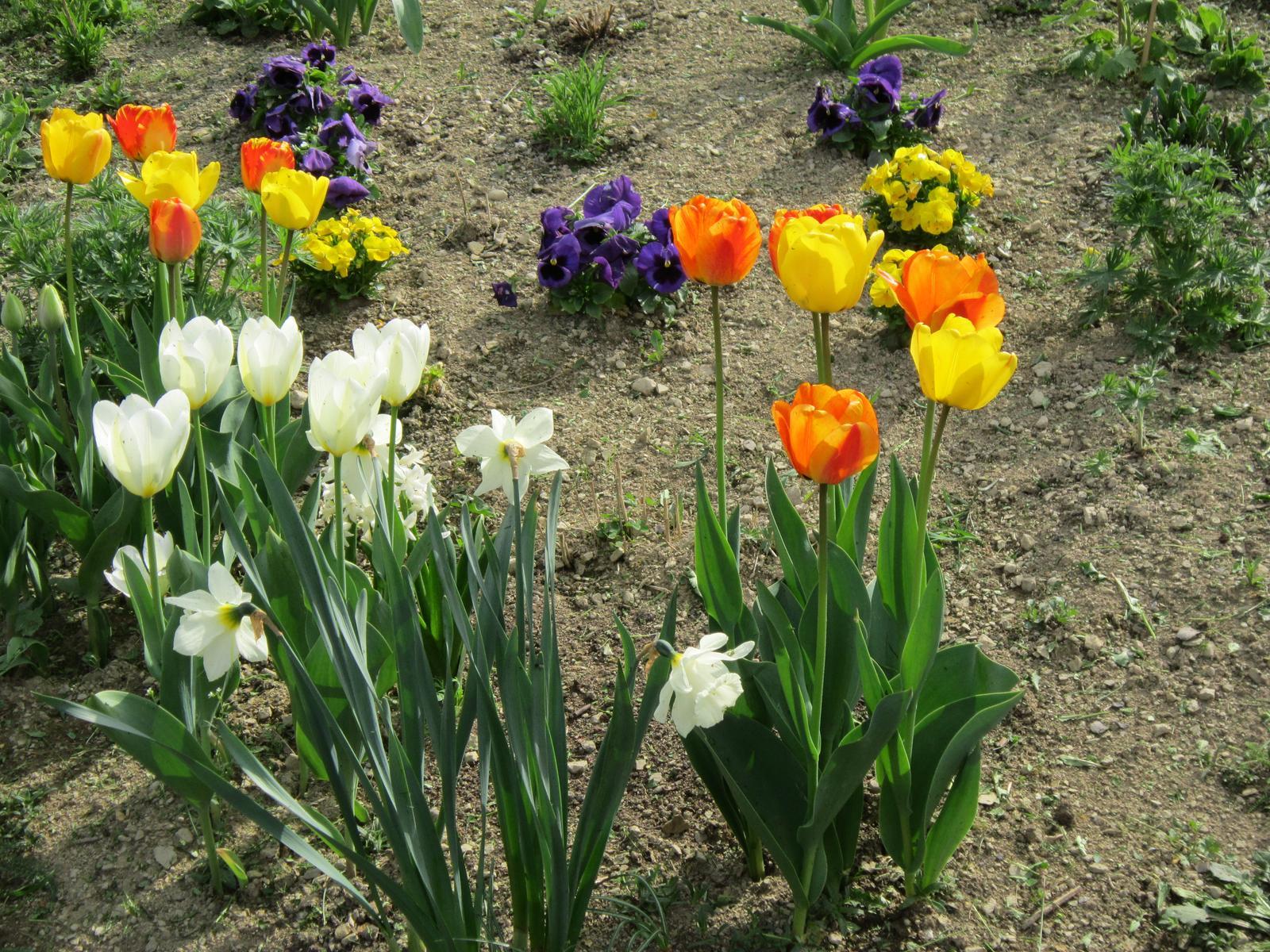 Moja záhrada...ako šiel čas - Obrázok č. 11