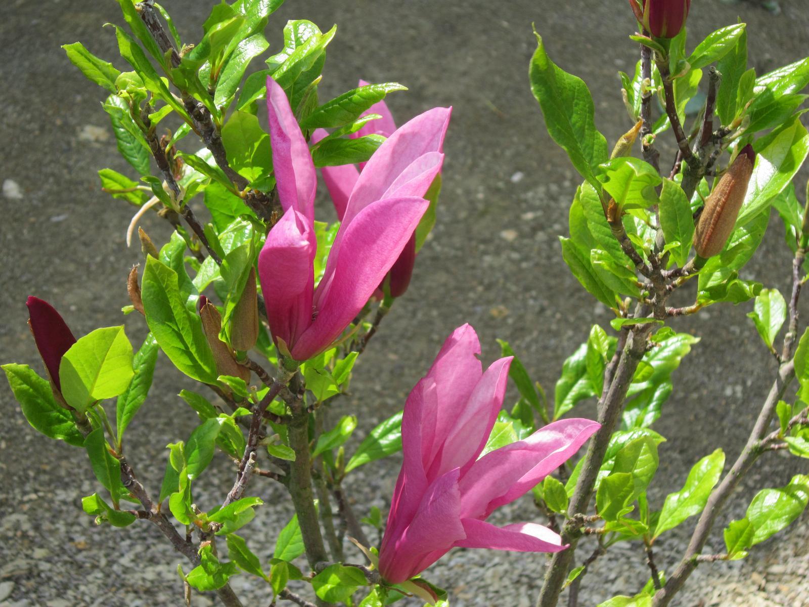 Moja záhrada...ako šiel čas - Obrázok č. 13