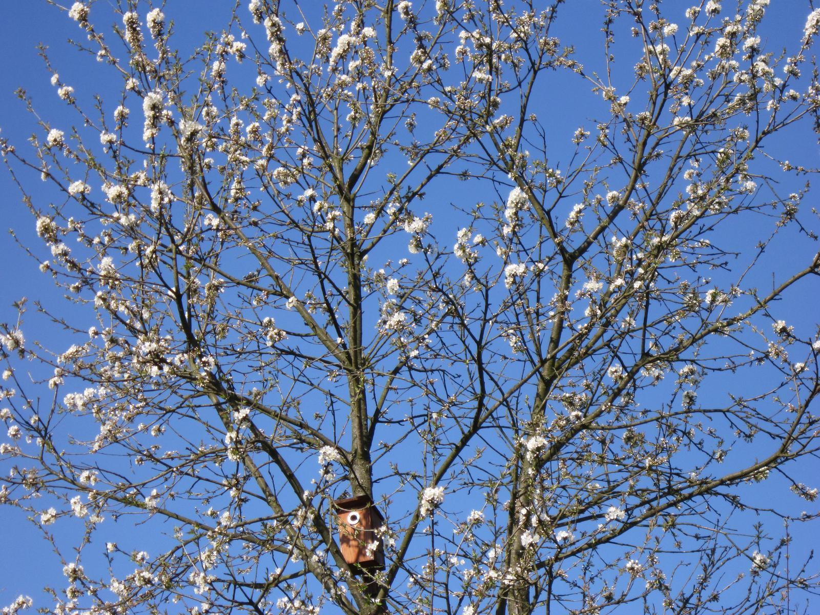 Moja záhrada...ako šiel čas - už to začína aj u nás pomaly kvitnúť...