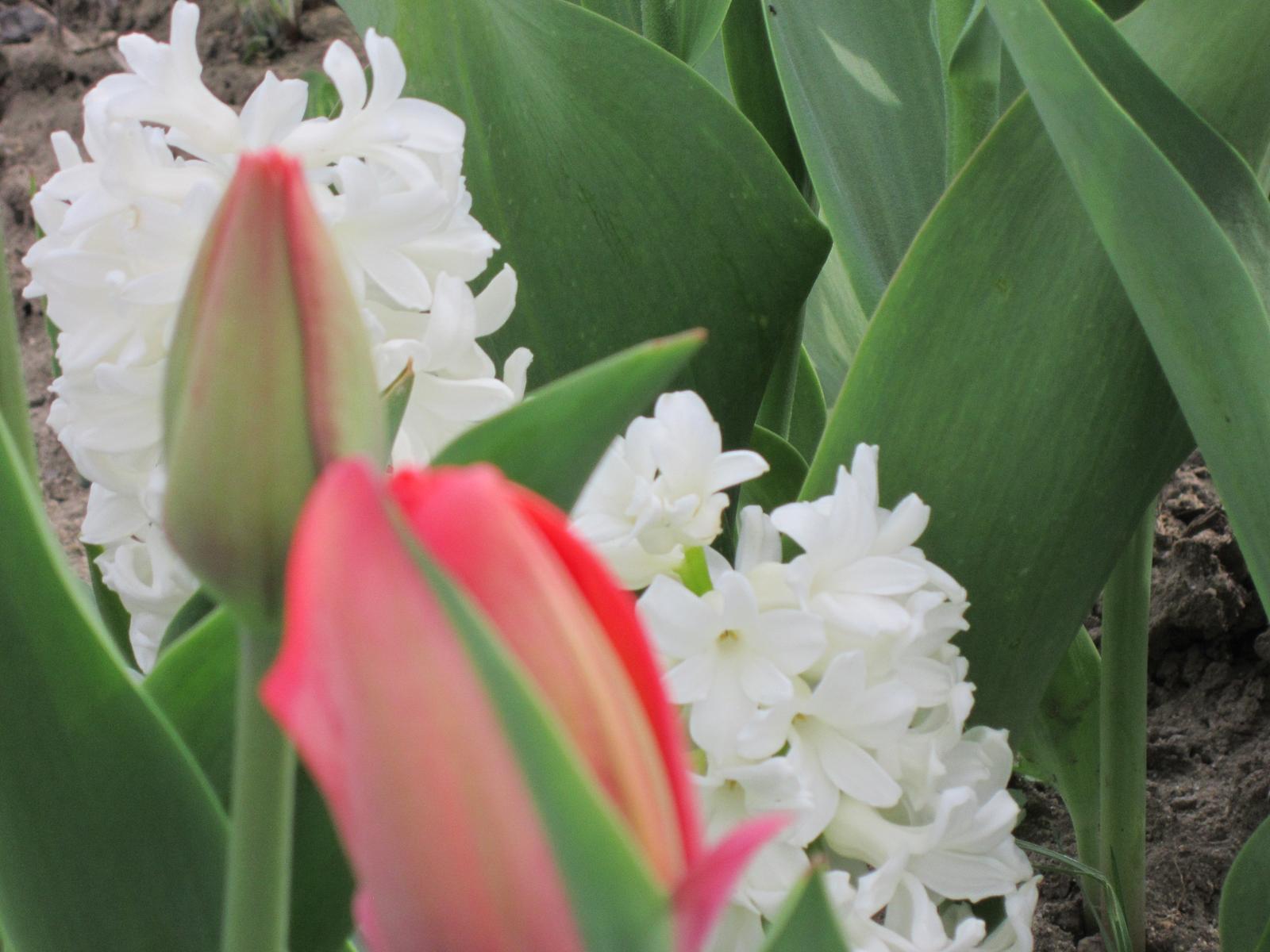 Moja záhrada...ako šiel čas - Obrázok č. 23