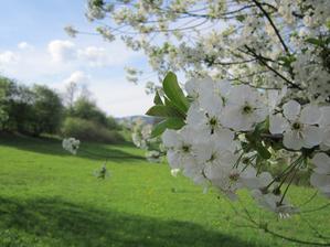 na 1.mája by nemal chýbať obrázok rozkvitnutej čerešne...