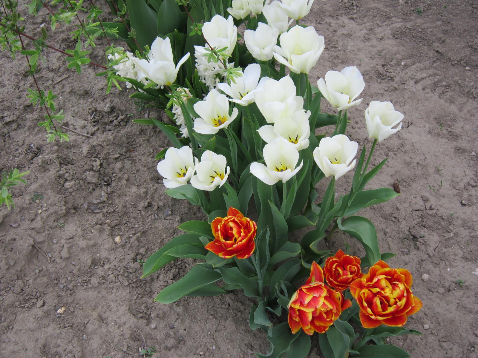 Moja záhrada...ako šiel čas - Obrázok č. 31