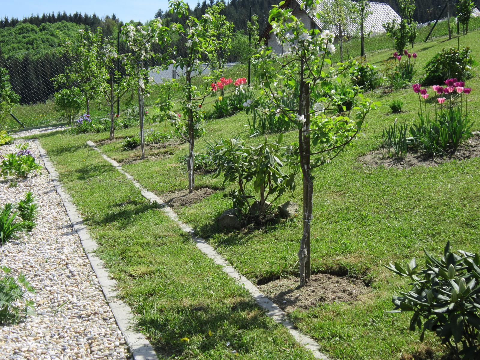 Moja záhrada...ako šiel čas - Pomaly tvarujeme záhradu...