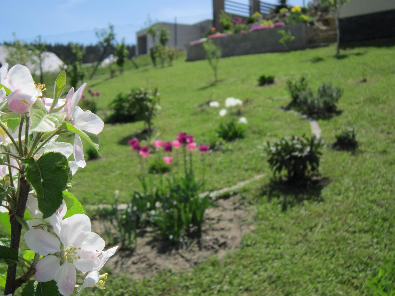 Moja záhrada...ako šiel čas - Obrázok č. 38