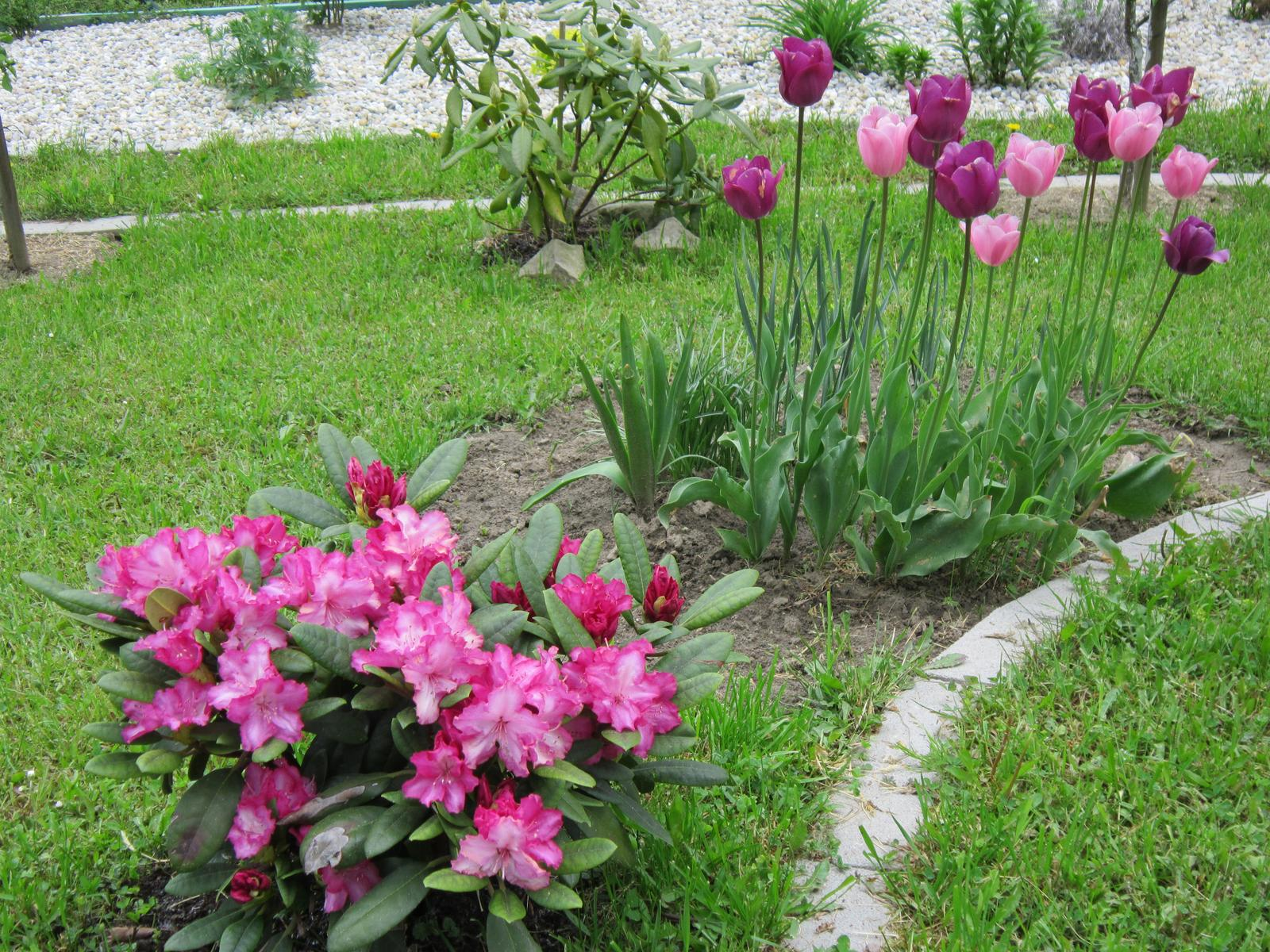 Moja záhrada...ako šiel čas - Obrázok č. 42