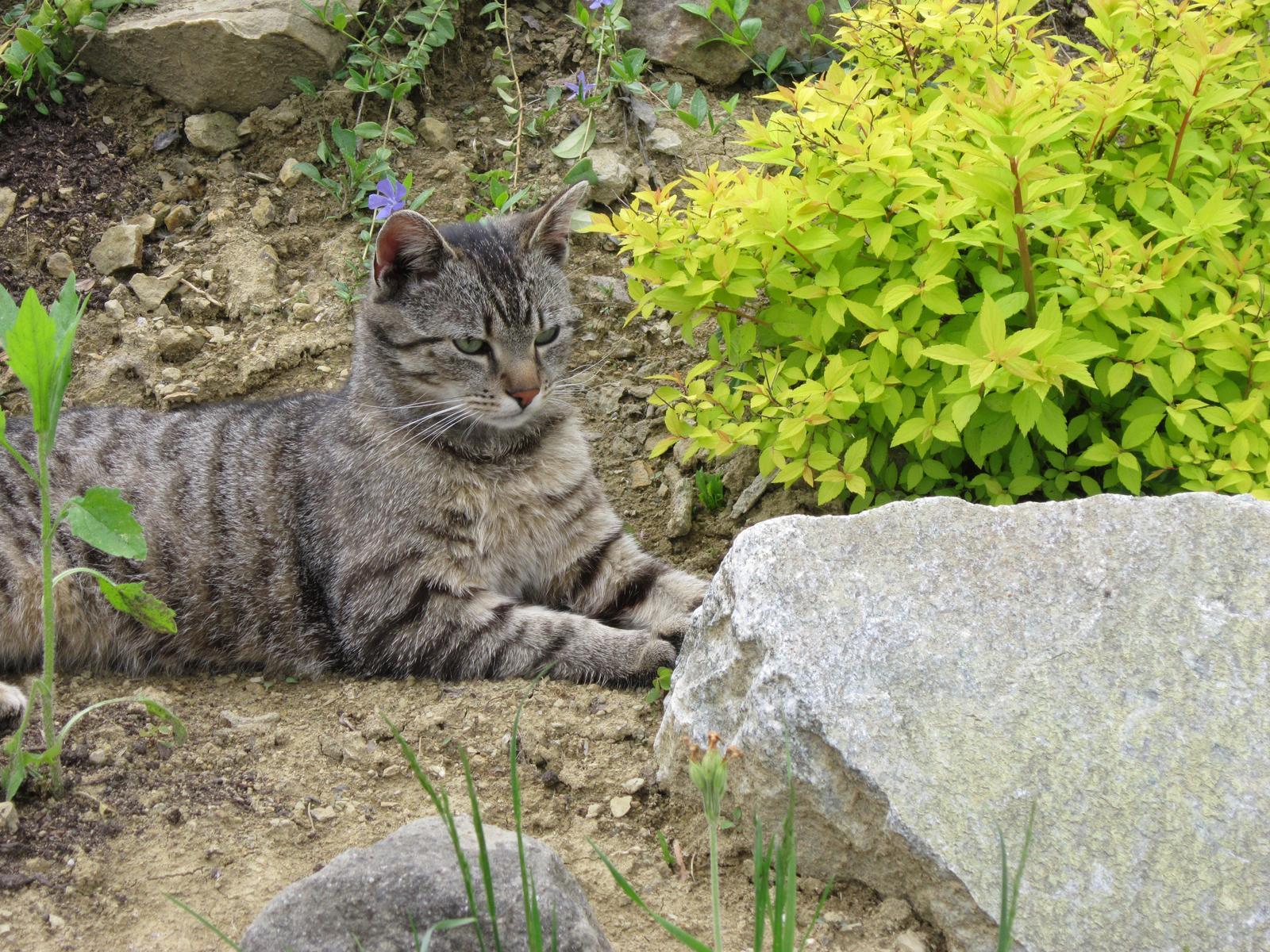 Moja záhrada...ako šiel čas - Môj najkrajší kvietok v skalke...