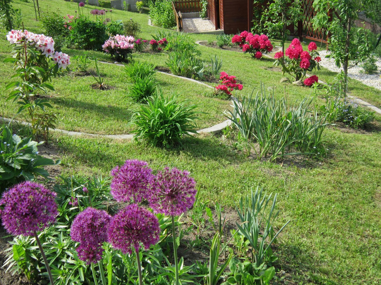 Moja záhrada...ako šiel čas - Rododendrony rozkvitli do krásy