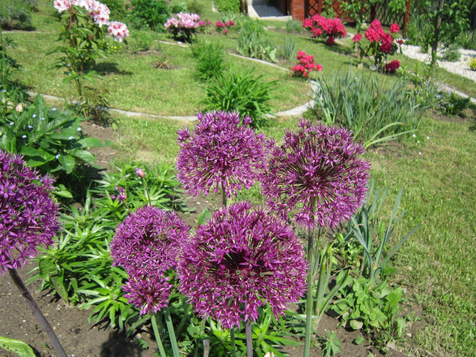 Moja záhrada...ako šiel čas - Obrázok č. 54