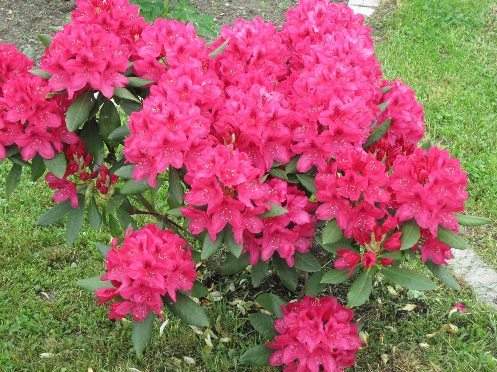 Moja záhrada...ako šiel čas - Obrázok č. 60